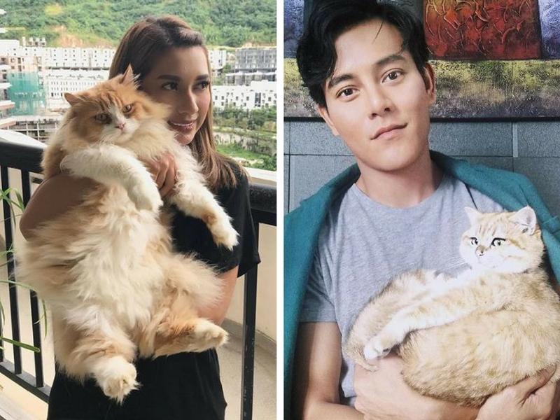10 Selebriti Malaysia Yang 'Gila' Kucing
