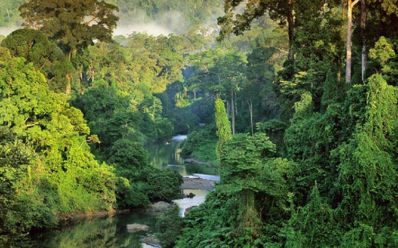 Bosan Dengan Island Hopping? 5 Aktiviti Dalam Hutan Ni Boleh Korang Lakukan Di Sabah